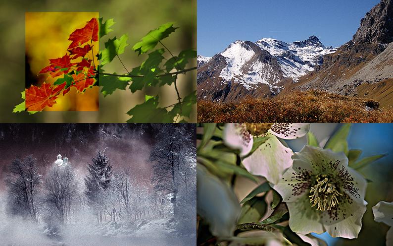 Vier Jahreszeiten von Hermann Muigg