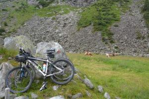 20170720_nh_Sundergrund_Mountainbikes & Kühe